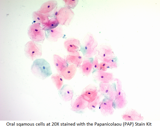 Papanicolaou (PAP) Stain Kit